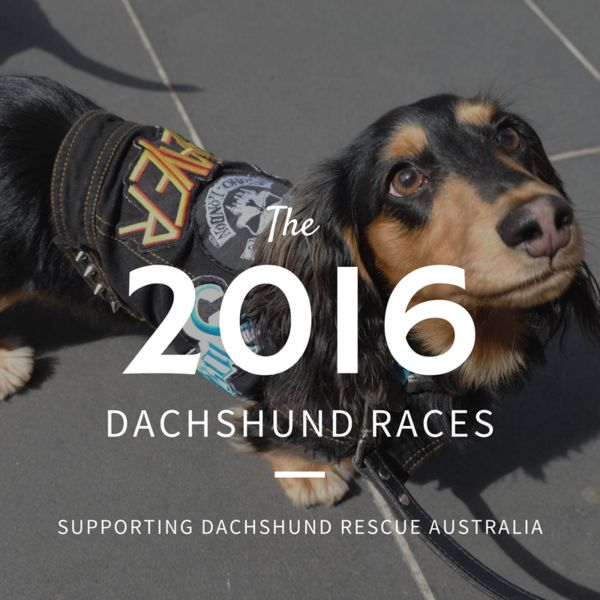 Hophaus Dachshund Races 2016
