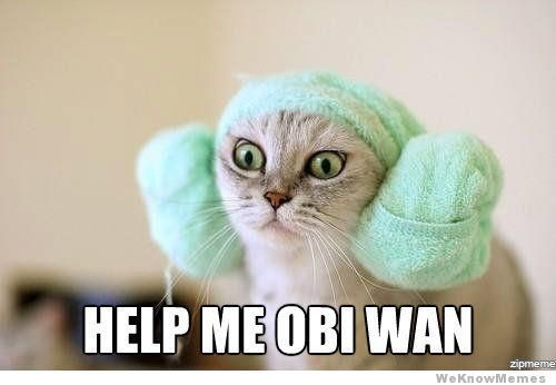HAAAA HA!: Cats, Help Me, Obi Wan, Animals, Star Wars, Funny Stuff, Princess Leia, Starwars
