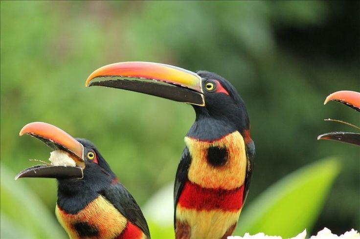 Vacation rental in Volcan, Panama.  87 bird species on property.  #vacation #rental #travel #vrbo