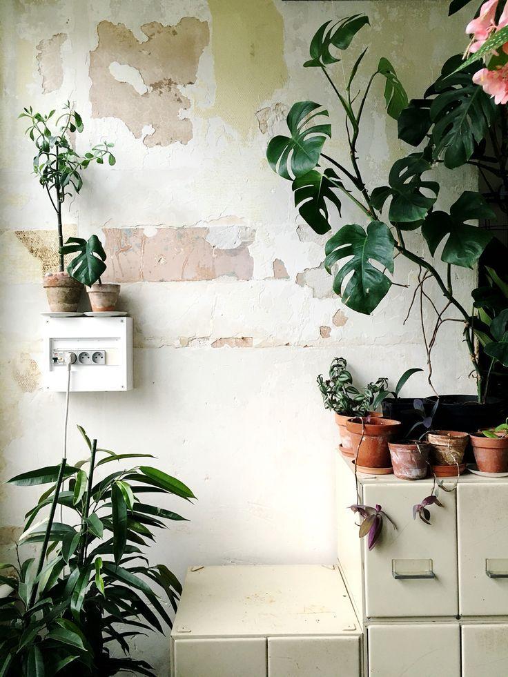 Houseplants #urbanjunglebloggers #urbanjunglebook