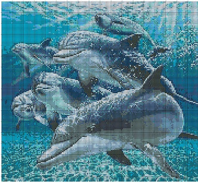 Delfini che giocano - Dolphins at Play