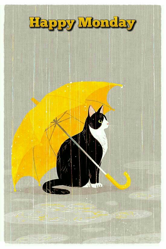 Image result for Wet Monday Morning with Pets