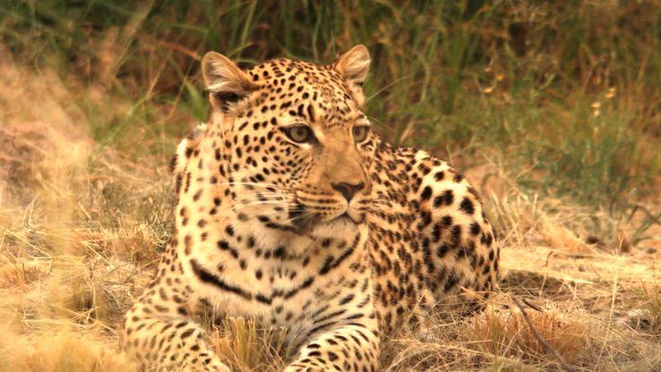 Africa, destin in bataia pustii - sambata, 25 ianuarie, 20:00
