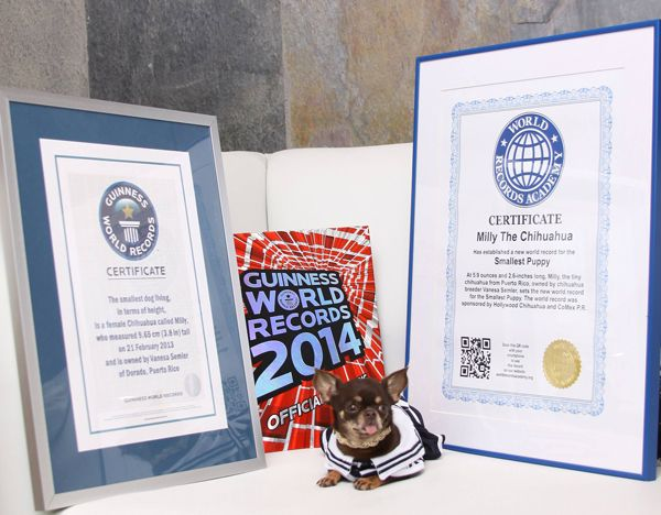 Guinness World Records Names a New World's Smallest Dog - Miracle Millie