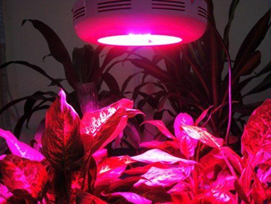 Choose the Best LED Grow Lights
