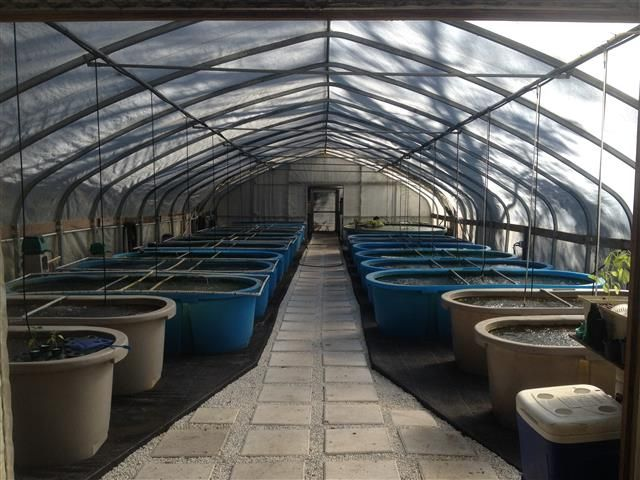13 best images about salmon farming on pinterest solar raising aquaponics system in a retractable roof greenhouse in floridawmv everything you should know about aquaponics made easy home aquaponics backyard sciox Images