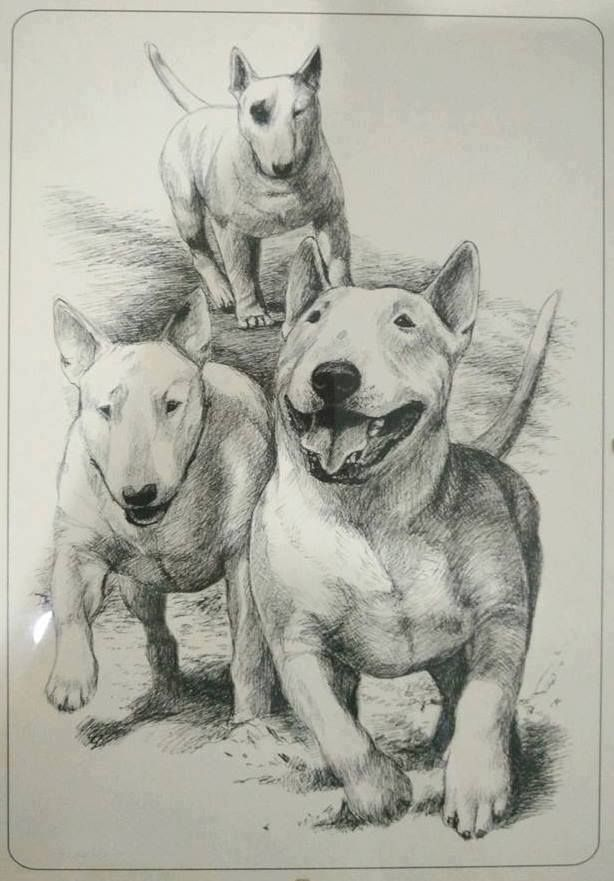 All about my dogs is a free resource for dog lovers. We help you answer any and all dog questions. http://allaboutmydogs.com/dog-run-best-dog/