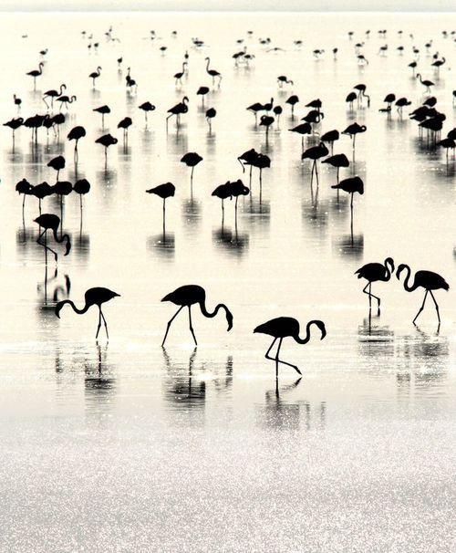 Flamingo's in summertime