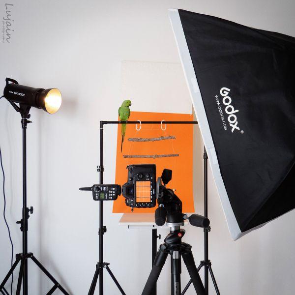 ببغاء الدرة Photoshop Photography Photography Telescope