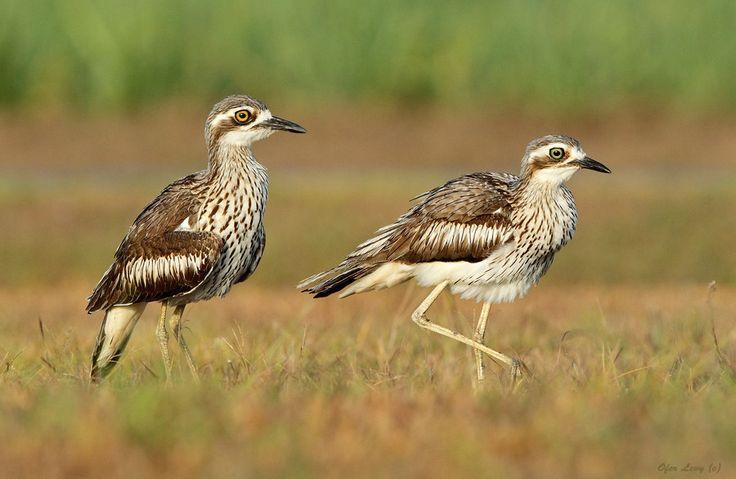 1324 Best Birds Images On Pinterest Birds Bird And