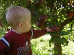 6 Best Apple Picking Orchards near Chicago