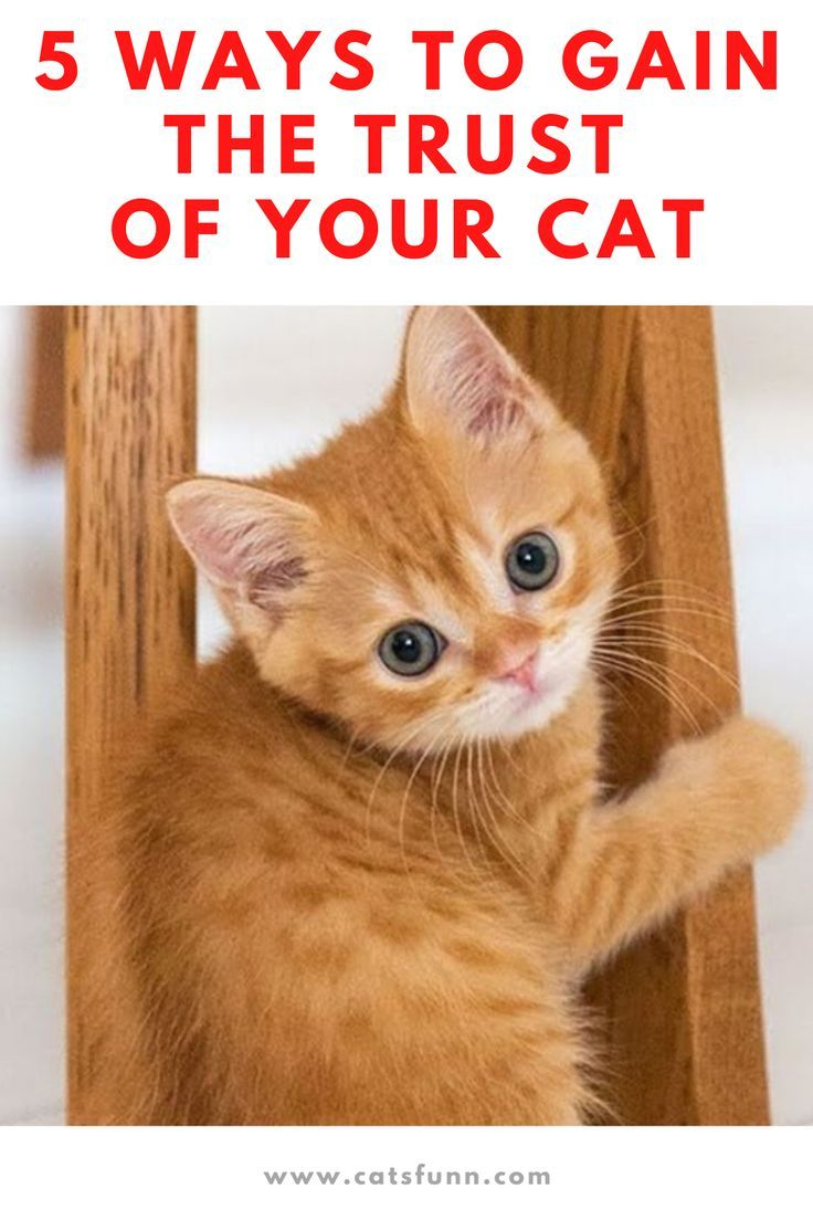 Ways To Gain The Trust Of Your Cat In 2020 Cats Cat Advice Cat Problems