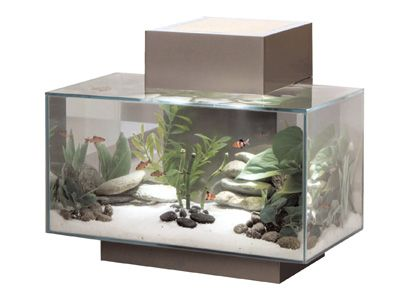 A fluval edge aquarium will bring a great zen feeling to for Decoration zen aquarium