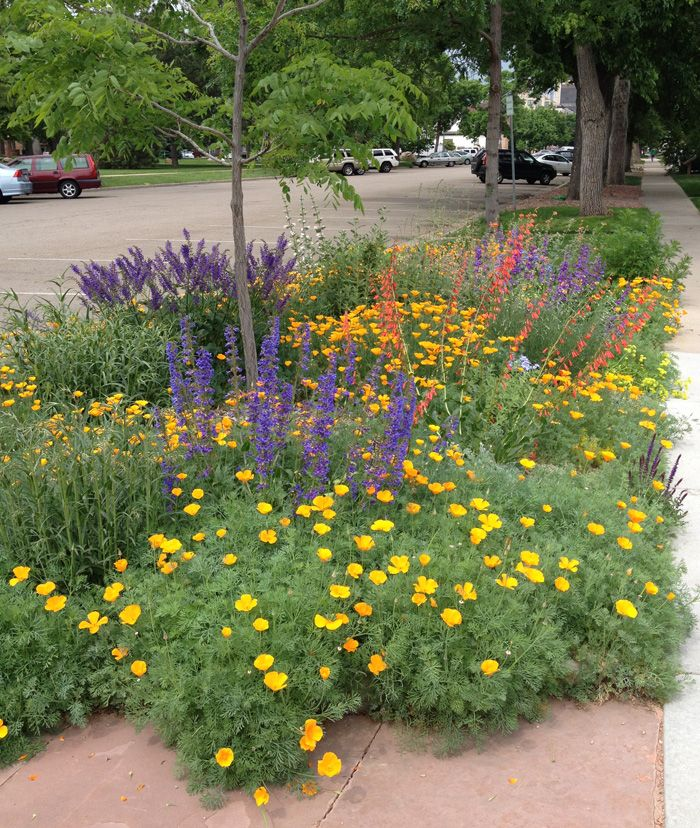 Best 10 Drought resistant landscaping ideas on Pinterest