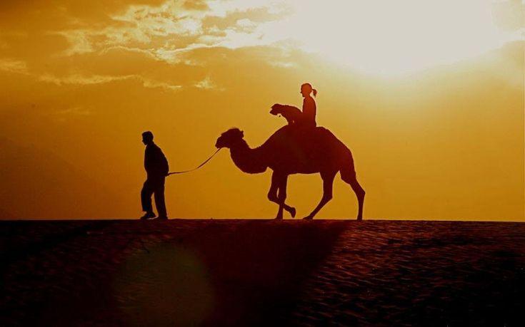 Oscar in Egypt