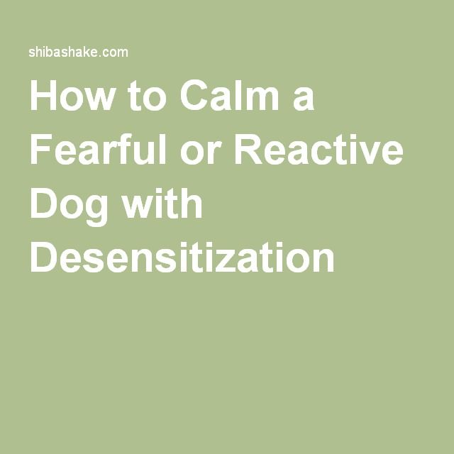 How to Calm a Fearful or Reactive Dog with Desensitization