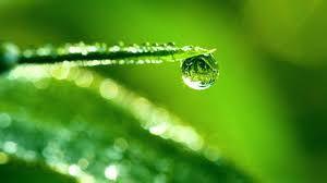 Image result for dew