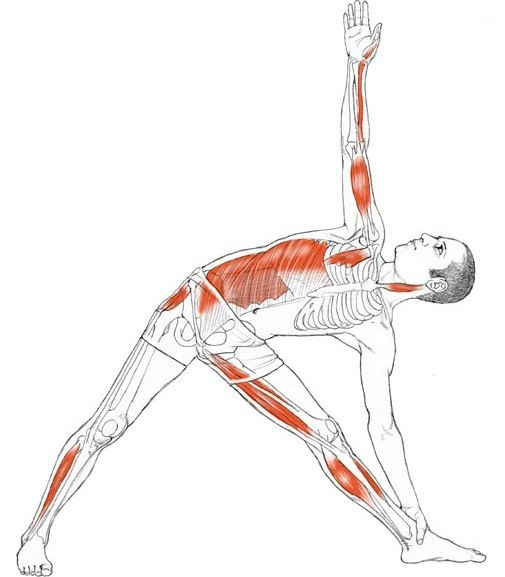 Utthita Trikonasana:Expands your chest and shoulders.  Increases mobility of your hip joints.  Increases neck mobility.  Stretches your spinal muscles.  Strengthens and tones muscles of your thights.  Stretches calf muscles, hamstrings, and hip musculature.  Increases proprioception (the sense of position in space) of feet and ankles.