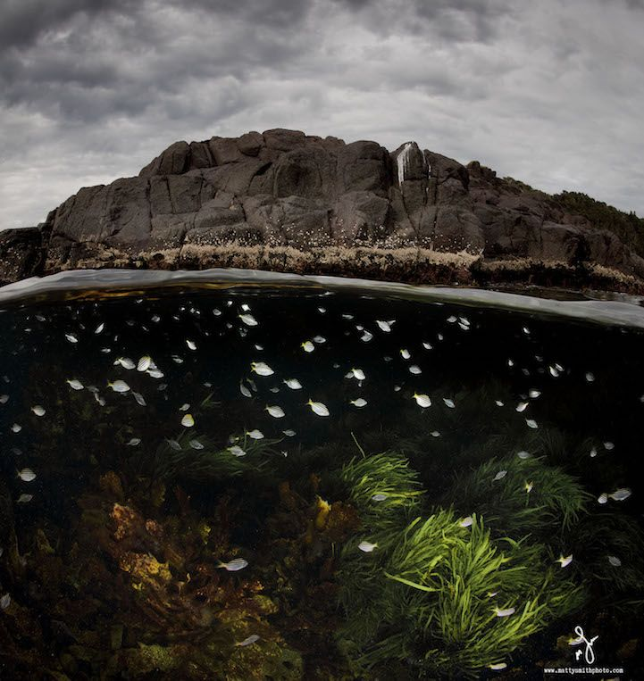 Gorgeous photos by Matty Smith simultaneously capture life above and below sea level. #photography #ocean