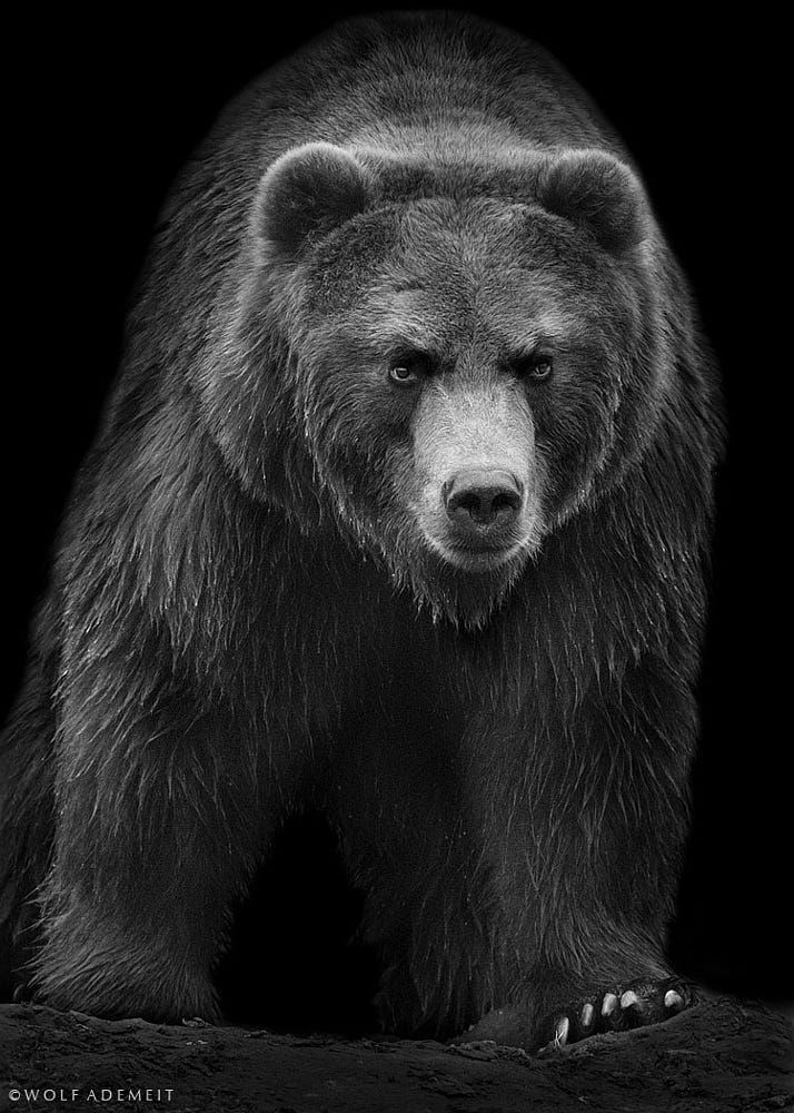 атака картинки на аву с медведями разделе