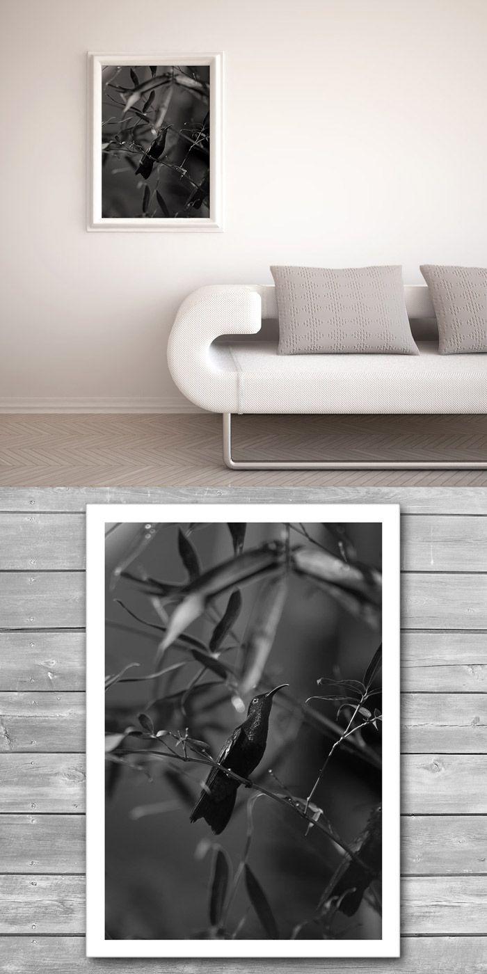 "Colibri, Black and White Prints, Humming Bird, BW Photography, Photo Prints, Birds Print, Paradise Bird, Tropical Garden, Wall Prints, Photo From ""Black and White"" photo prints series."