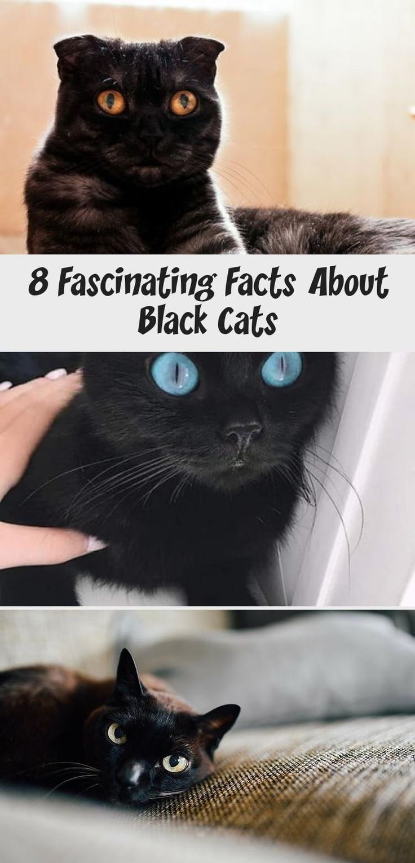 My Blog En Blog in 2020 Black cat appreciation day