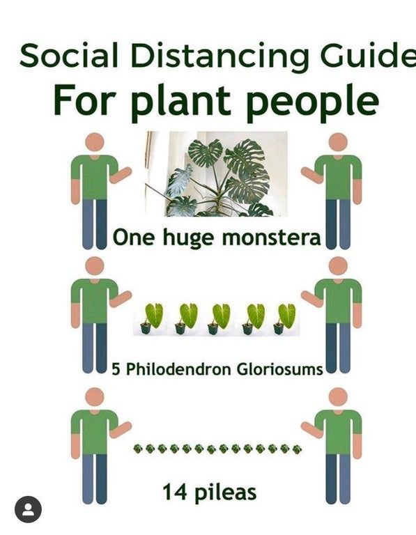 A Reference Guide For Troubling Times Houseplants In 2020 Plant Jokes Gardening Quotes Funny Horticulture Therapy