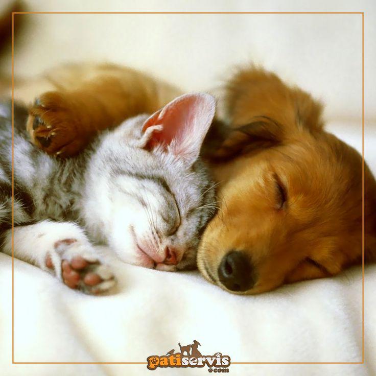 Evinde hem kedi hem de köpek olanları görebilir miyiz? Dostlarınızın ihtiyacı olan her şeyi aynı anda satın alabilirsiniz: patiservis.com
