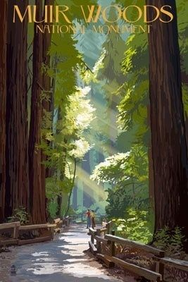 Muir Woods National Monument, California -