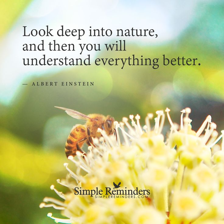 Look deep into nature and then you will understand ...