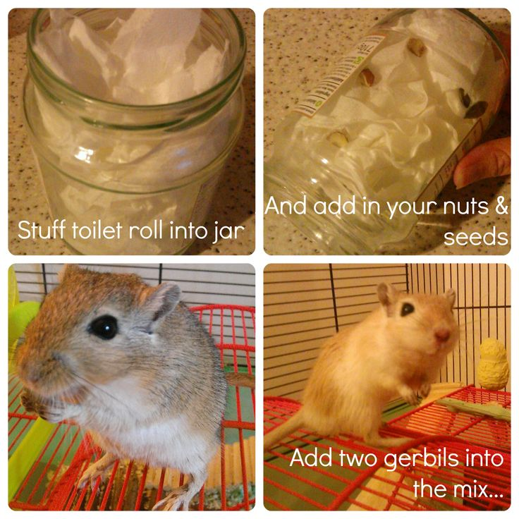 http://randomdaydreaming.blogspot.fr/2014/05/bedm-day-17-very-cheap-gerbil-toy.html