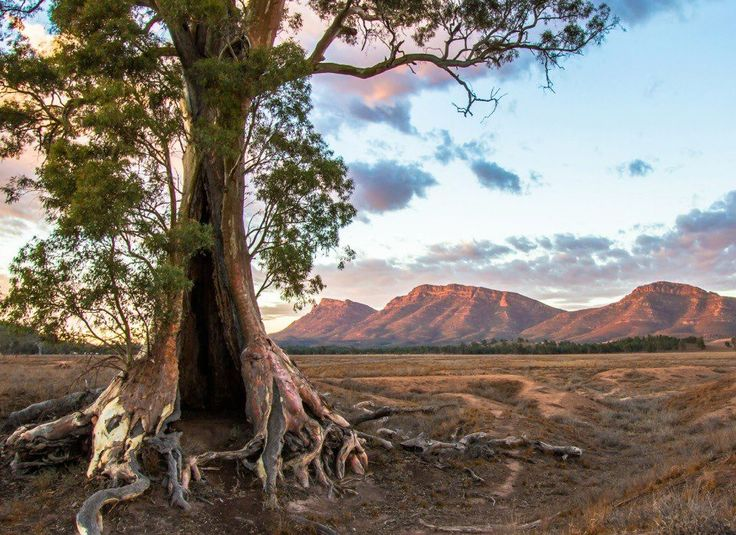 Wilpena Pound, Flinders Ranges, South Australia