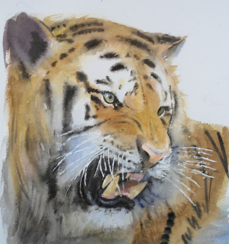Look at this amazing #tiger in #watercolours by Glynis Barnes Mellish coming soon to ArtTutor.com