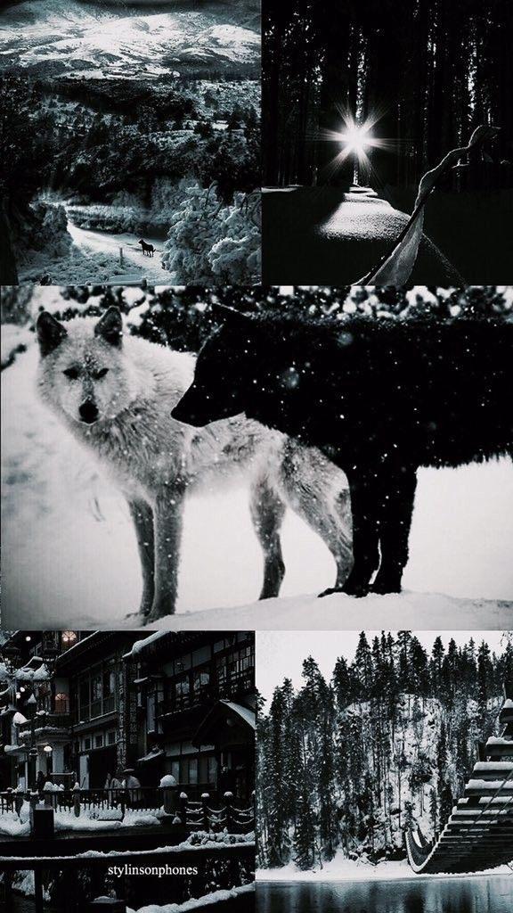 Winter view | wolves |  | ❄
