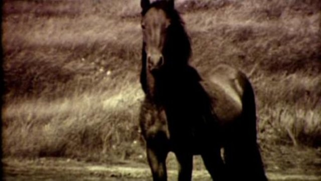Chasing Wild Horses - Clip 1 of 4 by Roberto Dutesco. This feature length documentary tells the story of photographer Roberto Dutesco and his passion for the incredible wild horses of Sable Island.