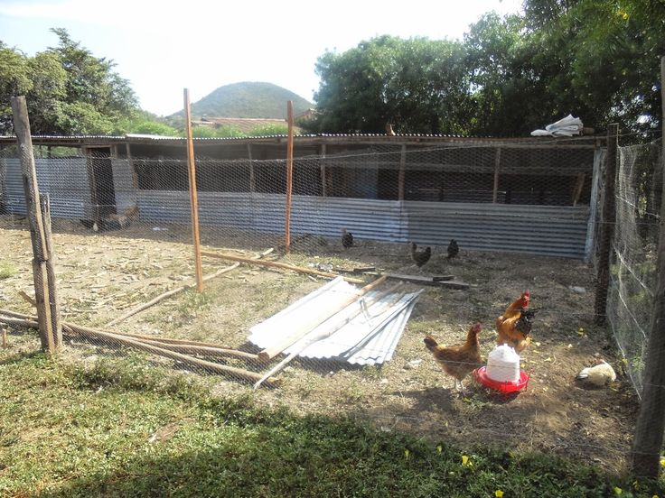 Best Poultry House Plans For 1000 Chickens With Kienyeji Chicken Poultry House Chicken House Garden Ideas Cheap Simple chicken house plan
