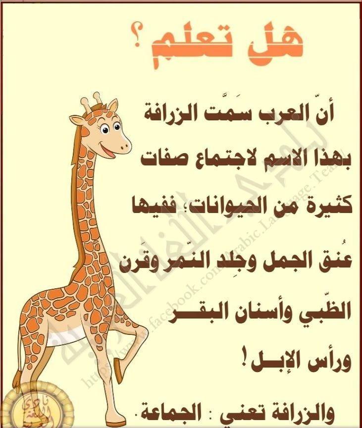 اسم الزرافة ゚ In 2020 Arabic Lessons Arabic Words Broccoli Crust Pizza
