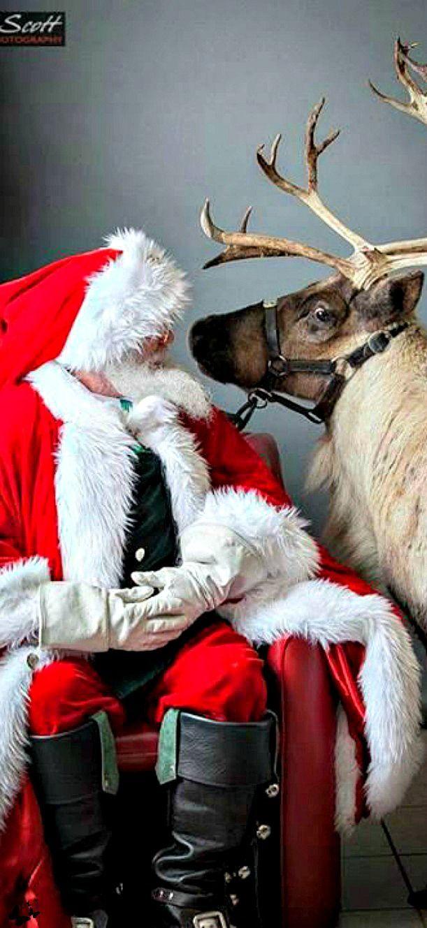 best 25 santa claus u0027s reindeer ideas on pinterest reindeer cam