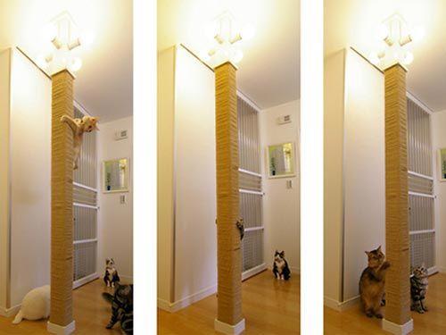 Adorei isso! Também dá pra colocar uma madeira de escora para os gatos arranharem (mais barato e mais fácil de achar)