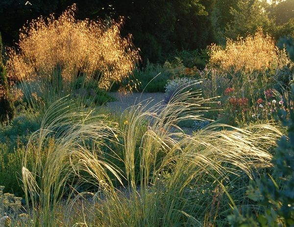 1000 images about ornamental grass planting on pinterest for Garden grass plants