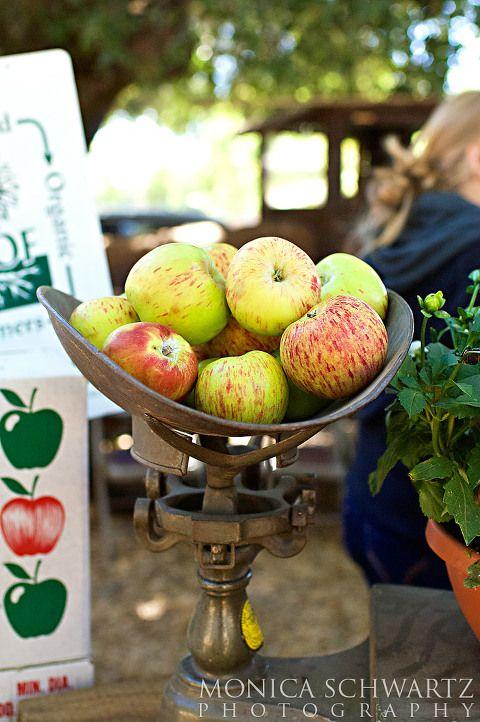 Gravestein-Apples-at-the-Fair-in-Sebastopol-California