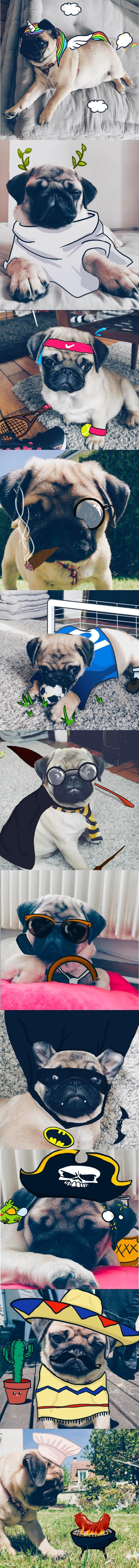 So my GF and I just got a pug aaaand we might have been drawing on his cute little face :)