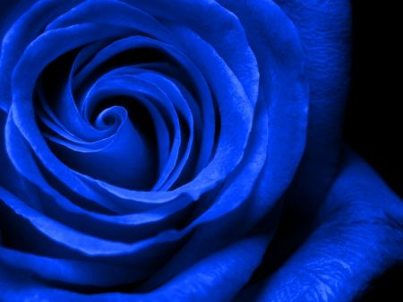 Beautiful royal blue - Flowers & Nature Background Wallpapers on ...