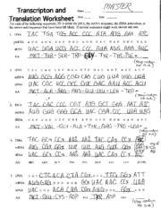Printables Transcription And Translation Worksheet Key transcription and translation worksheet key davezan