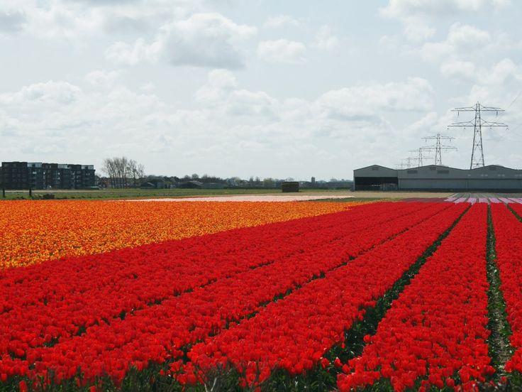 Leiden en de Bollenstreekroute
