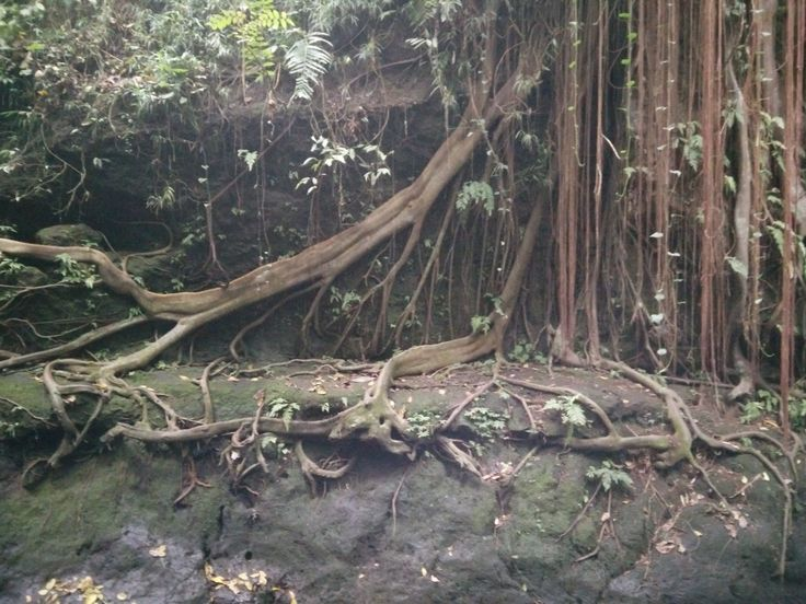 Rooted in Bali