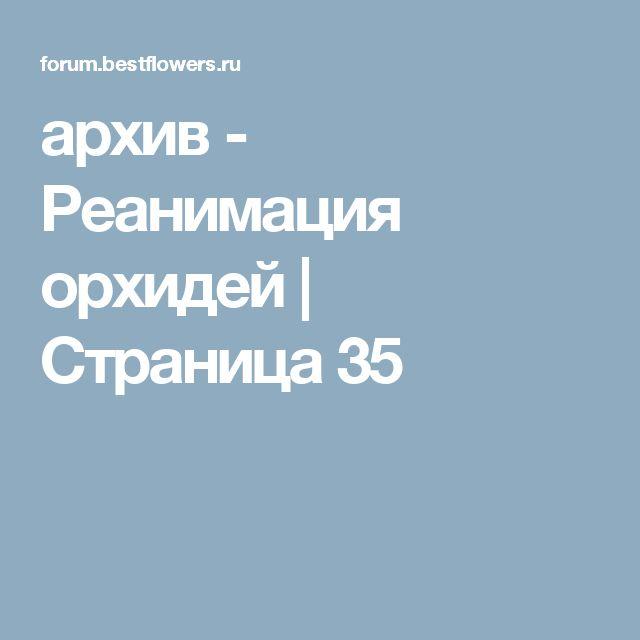 архив - Реанимация орхидей   Страница 35