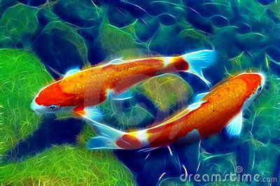 Pair of koi fish in the garden pond marine life for Japanese pond fish