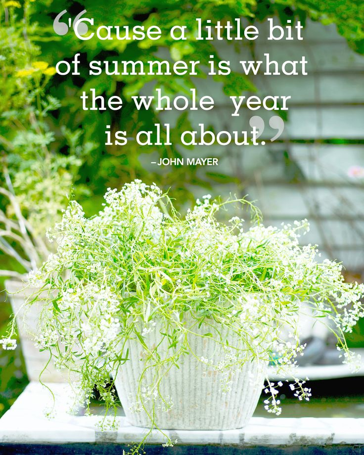 """24 Absolutely Beautiful Quotes About Summer Inspirational quotes and sayings about summer:  """"'Cause a little bit of summer is what the whole  year is all about."""" -John Mayer"""