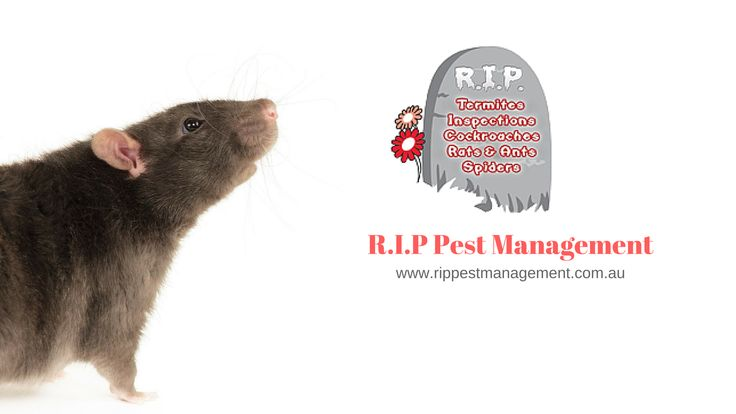 Need Pest Control Call Us R.I.P Pest Management for Resident and Commercial pest control service in North Shore